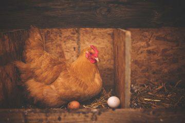 Jak ocenić, czy jajko jest świeże? Poznaj na to prostą metodę